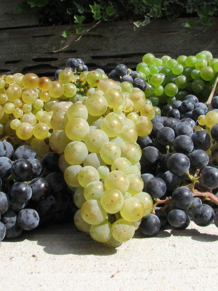 Amarone – esencja włoskich win