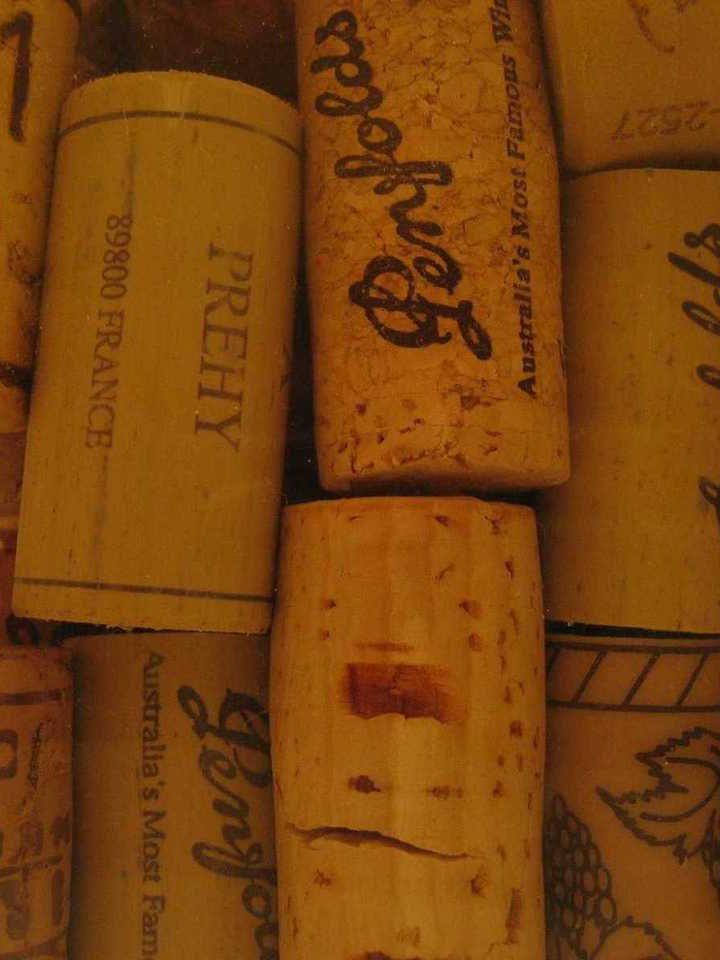 Charakterystyka win argentyńskich
