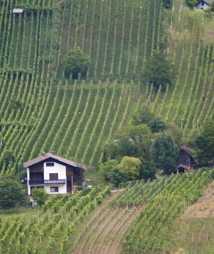 Co warto wiedzieć o winach włoskich?