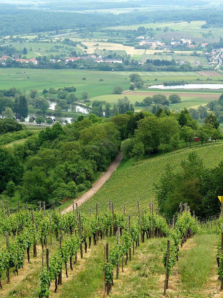 Wina Bordeaux – najlepsze francuskie wina?