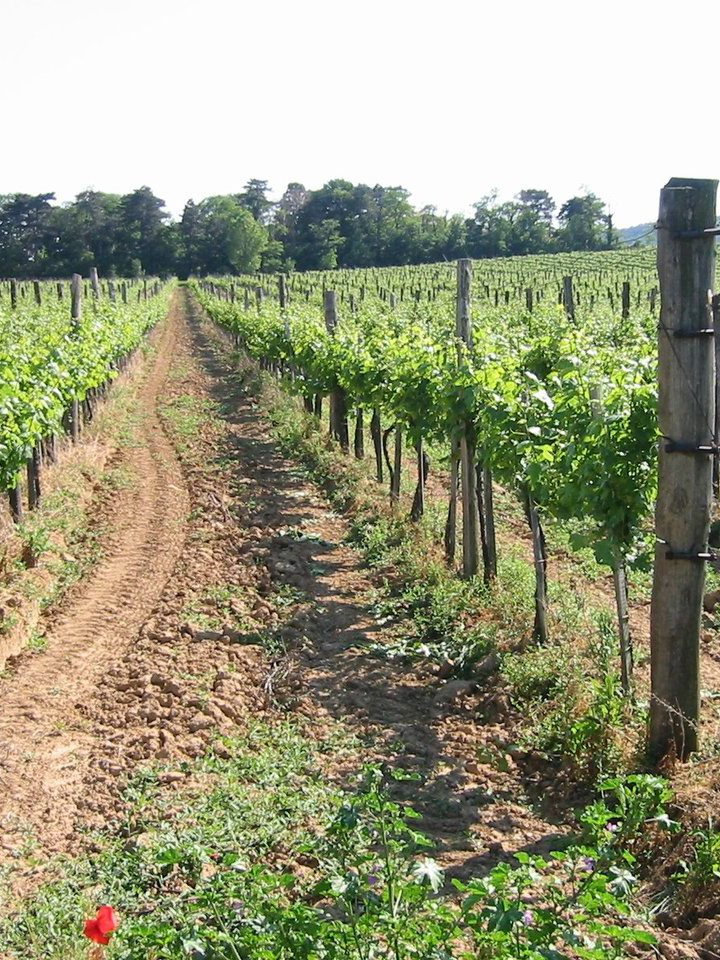 Wino – szlachetny trunek