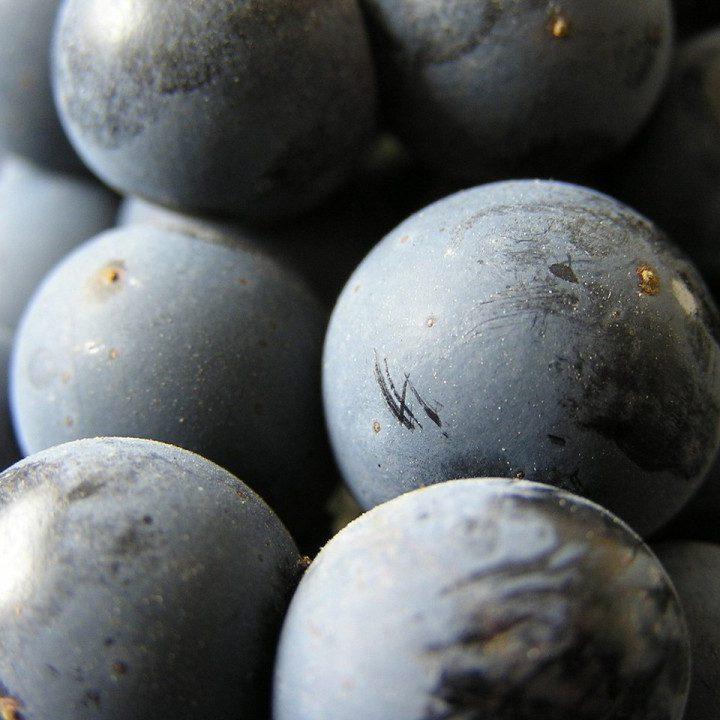 Z jakich szczepów powstają wina?