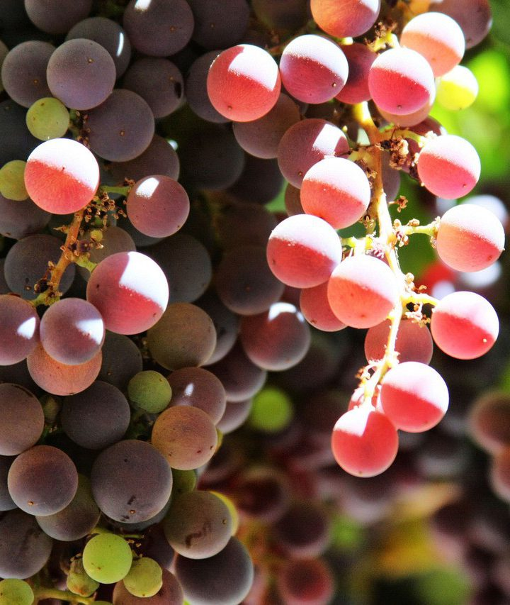 Badenia czyli wino po niemiecku