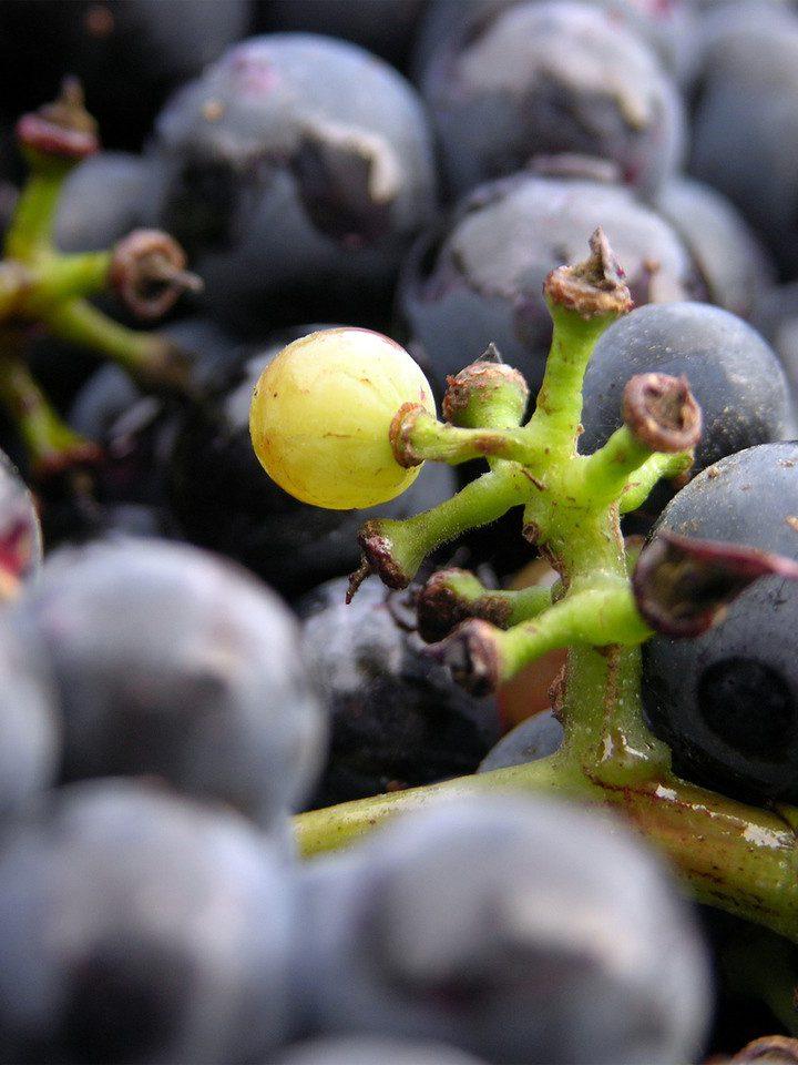 Degustacja win słodkich