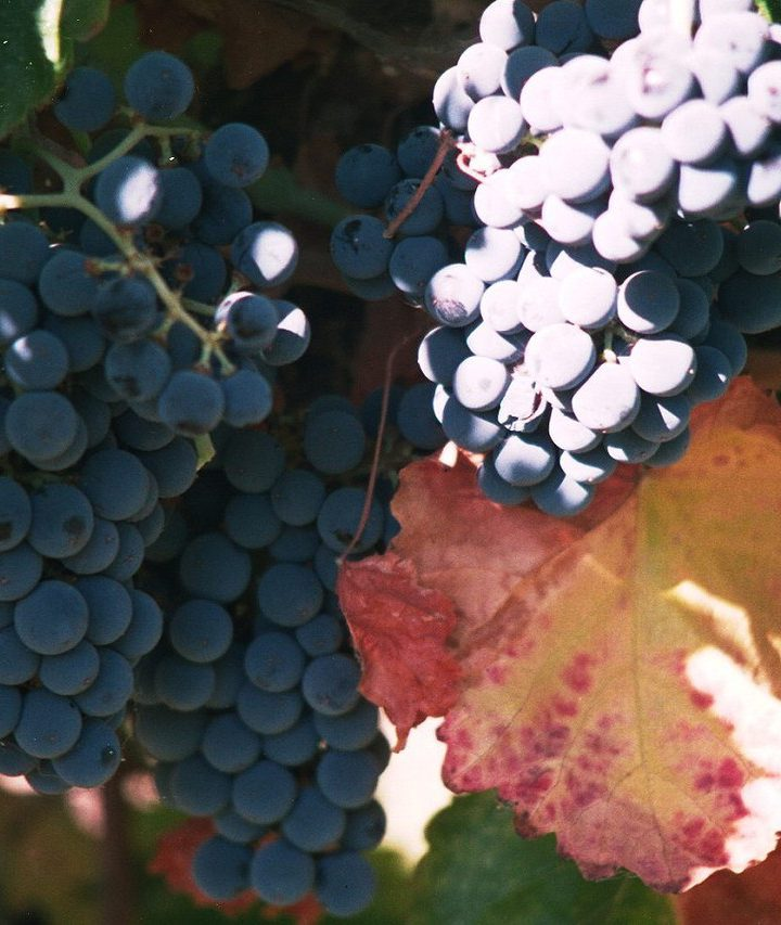 Dni wina w Mieście Skarbów