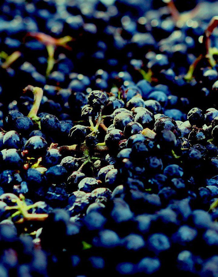 Produkcja wina kiedyś i dziś